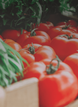 Tomatoes sourced from the Sustainable Agriculture